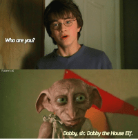 Elf, Memes, and Phoenix: Who are you?  TLOAWIIIG  Dobby, sir. Dabby the House Elf. Dobby kind of annoyed me in CoS - Q- hippogriffs or phoenixes? --- HarryPotter