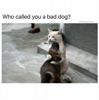 """Ass, Bad, and Bae: Who called you a bad dog?  @DrSmashlove When u see bae after a long ass 18 hour work day and say that somebody at work stressing u out and she say """"point him out so I can fuck his father one (1) time and make the old man leave his mom so their whole family gets torn apart"""" WhereSheAt MyKindOfCrazy SuperBae ForeverTypeOfLove 😍😂😂😍"""