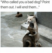 """Memes, 🤖, and Dog: """"Who called you a bad dog? Point  them out. I will end them..."""" My sister is coming home tomorrow ayeee"""