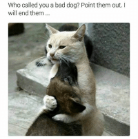Bad, Funny, and Memes: Who called you a bad dog? Point them out. I  will end them.. Follow me @hilarious.ted for more animal memes