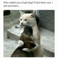 Bad, Memes, and Ted: Who called you a bad dog? Point them out. I  will end them @hilarious.ted has the best animal memes