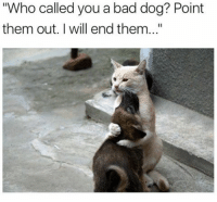 """Memes, 🤖, and Dog: """"Who called you a bad dog? Point  them out. will end them..."""" Tell me right meow"""
