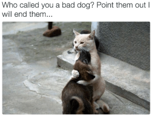 Bad, Dog, and Who: Who called you a bad dog? Point them out  will end them...