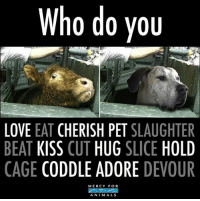 Animals, Love, and Memes: Who do you  LOVE  EAT  CHERISH PET  SLAUGHTER  BEAT  KISS  CUT  HUG  SLICE  HOLD  CAGE  CODDLE ADORE  DEVOUR  MERCY FOR  ANIMALS Think about it. govegan animalrights vegan loveanimals