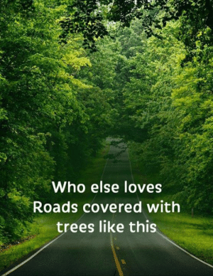 Memes, Trees, and 🤖: Who else loves  Roads covered with  trees like this <3