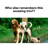 Memes, Amazing, and 🤖: Who else remembers this  amazing trio??