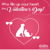 My fur-babies fill mine 😍💕: Who fills up your heart  this  pets  Healthy Pets. Mercola.com My fur-babies fill mine 😍💕