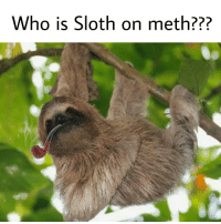Sloth: Who is Sloth on meth???