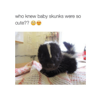 did Jude really commit suicide wow: who knew baby skunks were so  Cute? did Jude really commit suicide wow