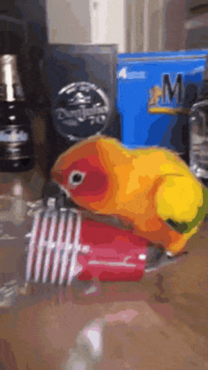 Who knew, plastic cups breaks your parrot: Who knew, plastic cups breaks your parrot