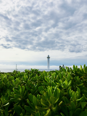 Who knew the iPhone 7 could take pictures like this? Okinawa, Japan.: Who knew the iPhone 7 could take pictures like this? Okinawa, Japan.