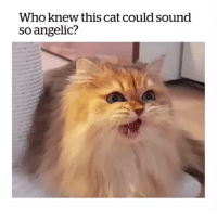 angel: Who knew this cat could sound  so angelic? angel