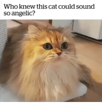 Very talented (contact us at partner@memes.com for credit-removal): Who knew this cat could sound  so angelic? Very talented (contact us at partner@memes.com for credit-removal)