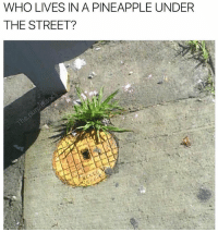 ARE YA READY KIDS (@the.purple.sock): WHO LIVES IN A PINEAPPLE UNDER  THE STREET? ARE YA READY KIDS (@the.purple.sock)