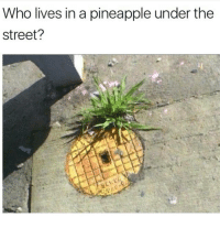 Crack Bob Saggy Pants • ➫➫ Follow @savagememesss for more posts daily: Who lives in a pineapple under the  Street? Crack Bob Saggy Pants • ➫➫ Follow @savagememesss for more posts daily