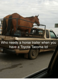 Funny, Lol, and Toyota: Who needs a horse trailer when you  have a Toyota Tacoma lol