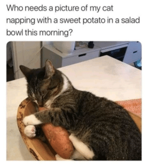Memes, Target, and Tumblr: Who needs a picture of my cat  napping with a sweet potato in a salad  bowl this morning? positive-memes:  i do , u do , we do , *-* 33333