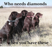 When you have fur babies like these who needs diamonds ?? Y  =  Yes  N  =  No Repost if you agree: Who needs diamonds  when you have these When you have fur babies like these who needs diamonds ?? Y  =  Yes  N  =  No Repost if you agree