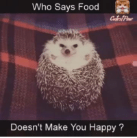 #cute #funny #hedgehog #food: Who Says Food  Doesn't Make You  Happy #cute #funny #hedgehog #food