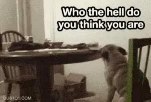 I love dogs….and the writing in the first gif…: Who the hell do  you think you are  GUSTO1.COM I love dogs….and the writing in the first gif…