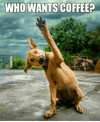 WHO WANTS COFFEEP Friday Eve! A long hot week.. We hope your work day goes by quickly and it is Pawsome!