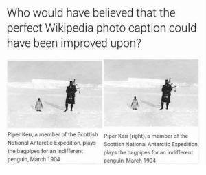 Funny, Wikipedia, and Penguin: Who would have believed that the  perfect Wikipedia photo caption could  have been improved upon?  Piper Kerr, a member of the Scottish  National Antarctic Expedition, plays  the bagpipes for an indifferent  penguin, March 1904  Piper Kerr (right), a member of the  Scottish National Antarctic Expedition,  plays the bagpipes for an indifferent  penguin, March 1904 The only Wikipedia edit that could have been made. via /r/funny https://ift.tt/2B2ydYv