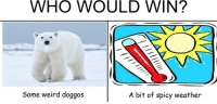 Spicy: WHO WOULD WIN?  A bit of spicy weather  Some weird doggos