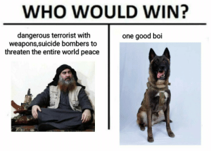 Blessed doggo (good boy): WHO WOULD WIN?  dangerous terrorist with  weapons,suicide bombers to  threaten the entire world peace  one good boi Blessed doggo (good boy)