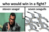 who would win in a fight?  steven seagal  seven seagulls my money is on steven seagulla~ sauceboss