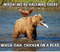 FWD: Just taking a break from the political posts sweetie! LOL: WHOA WERE HALFWAY THERE  WHOA OAH, CHICKEN ON A BEAR FWD: Just taking a break from the political posts sweetie! LOL