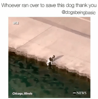 And to this person filming, dive out of your helicopter and help! Good work Chicago Police!: Whoever ran over to save this dog thank you  @dogsbeingbasic  Chicago, Illinois  obe NEWS And to this person filming, dive out of your helicopter and help! Good work Chicago Police!