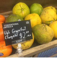Fuck this. Fuck society. Labelling grapefruits based on what you see on the outside, IT'S WHAT'S ON THE INSIDE THAT MATTERS! This grapefruit is probably delicious, so stay in your lane. GrapefruitLivesMatter GrapefruitPositivity beautiful loveyourself: WHOLE  CONVENTIONAL  Ugli Grapefruit  50  Angelo  Hino  UGLI Fuck this. Fuck society. Labelling grapefruits based on what you see on the outside, IT'S WHAT'S ON THE INSIDE THAT MATTERS! This grapefruit is probably delicious, so stay in your lane. GrapefruitLivesMatter GrapefruitPositivity beautiful loveyourself