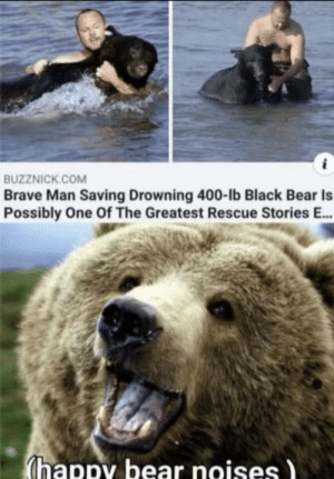 wholesome bear: wholesome bear