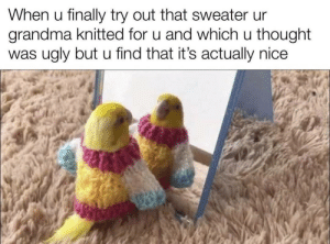 Wholesome Birb: Wholesome Birb
