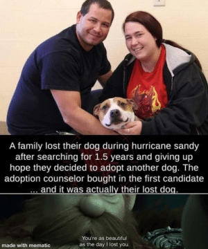 Wholesome content everyone needs: Wholesome content everyone needs