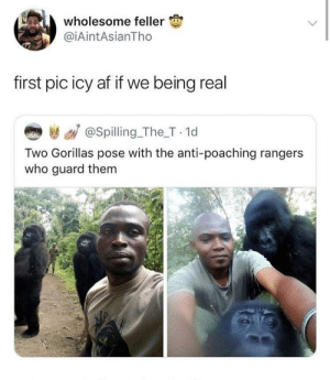 Af, Cool, and Rangers: wholesome feller  @iAintAsianTho  first pic icy af if we being real  き / @spilling_The_T 1d  Two Gorillas pose with the anti-poaching rangers  who guard them That's cool as hell