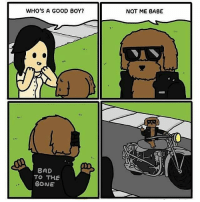 Bad, Memes, and Good: WHO'S A GOOD BOY?  A BAD  TO THE  BONE  NOT ME BABE  ut