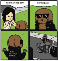 Bones, Memes, and Babes: WHO'S A GOOD BOY?  BAD  TO THE  BONE  NOT ME BABE ~doggle