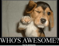 WHO'S AWESOME?  You're awesome. You are all so awesome! Thank you for liking our page & laughing with us!  Kayla & Meredith