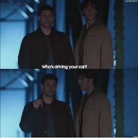 """Driving, Memes, and Supernatural: Who's drtving your car?  SAVING DEAN  1x01 ITS SO HOT AND I CANT SLEEP UGH - QOTD- write """"who's driving your """" and press one of the word suggestion buttons 🔥 - [ spnscenes spn supernatural jensenackles jaredpadalecki deanwinchester samwinchester spnfamily ]"""