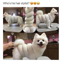 Looking like a rolled up towel & stuff 😂 @awdoggies: Who's his hair stylist?  @meme world Looking like a rolled up towel & stuff 😂 @awdoggies