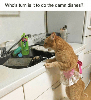 24 Funniest Animal Images With Captions You Have Seen On The Internet - JustViral.Net: Who's turn is it to do the damn dishes?!  4 24 Funniest Animal Images With Captions You Have Seen On The Internet - JustViral.Net