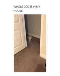 Memes, My House, and House: WHOSE DOG IS IN MY  HOUSE