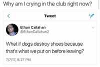 Club, Crying, and Dogs: Why am I crying in the club right now?  Tweet  Ethan Callahan  @EthanCallahan2  What if dogs destroy shoes because  that's what we put on before leaving?  7/7/17, 8:27 PM shwoke