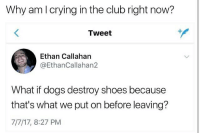 Club, Crying, and Dogs: Why am I crying in the club right now?  Tweet  Ethan Callahan  @EthanCallahan2  What if dogs destroy shoes because  that's what we put on before leaving?  7/7/17, 8:27 PM bc u a pussay