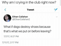 7/11, Club, and Crying: Why am l crying in the club right now?  Tweet  Ethan Callahan  @EthanCallahan2  What if dogs destroy shoes because  that's what we put on before leaving?  7/7/17, 8:27 PM  7/11/17, 2:17 PM dogs are the best omg . . . . . [ funny memes meme comedy comics cool textpost textposts l4l likeforlike laugh funnypictures pictures funnymemes humor post relateable lol lmao 😂 memez tumblr funnytumlr mood haha xd ]