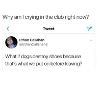 Club, Dogs, and Memes: Why amlcrying in the club right now?  Tweet  Ethan Callahan  @EthanCallahan2  What if dogs destroy shoes because  that's what we put on before leaving? Ohhh boi