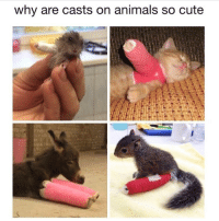 why are casts on animals so cute SOFA KING CUTE
