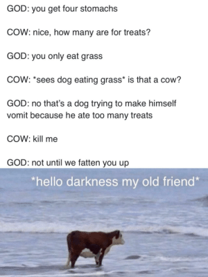 Why are cows here just to suffer: Why are cows here just to suffer