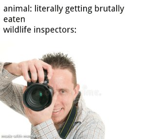 """""""why are the animals dieing?"""": """"why are the animals dieing?"""""""